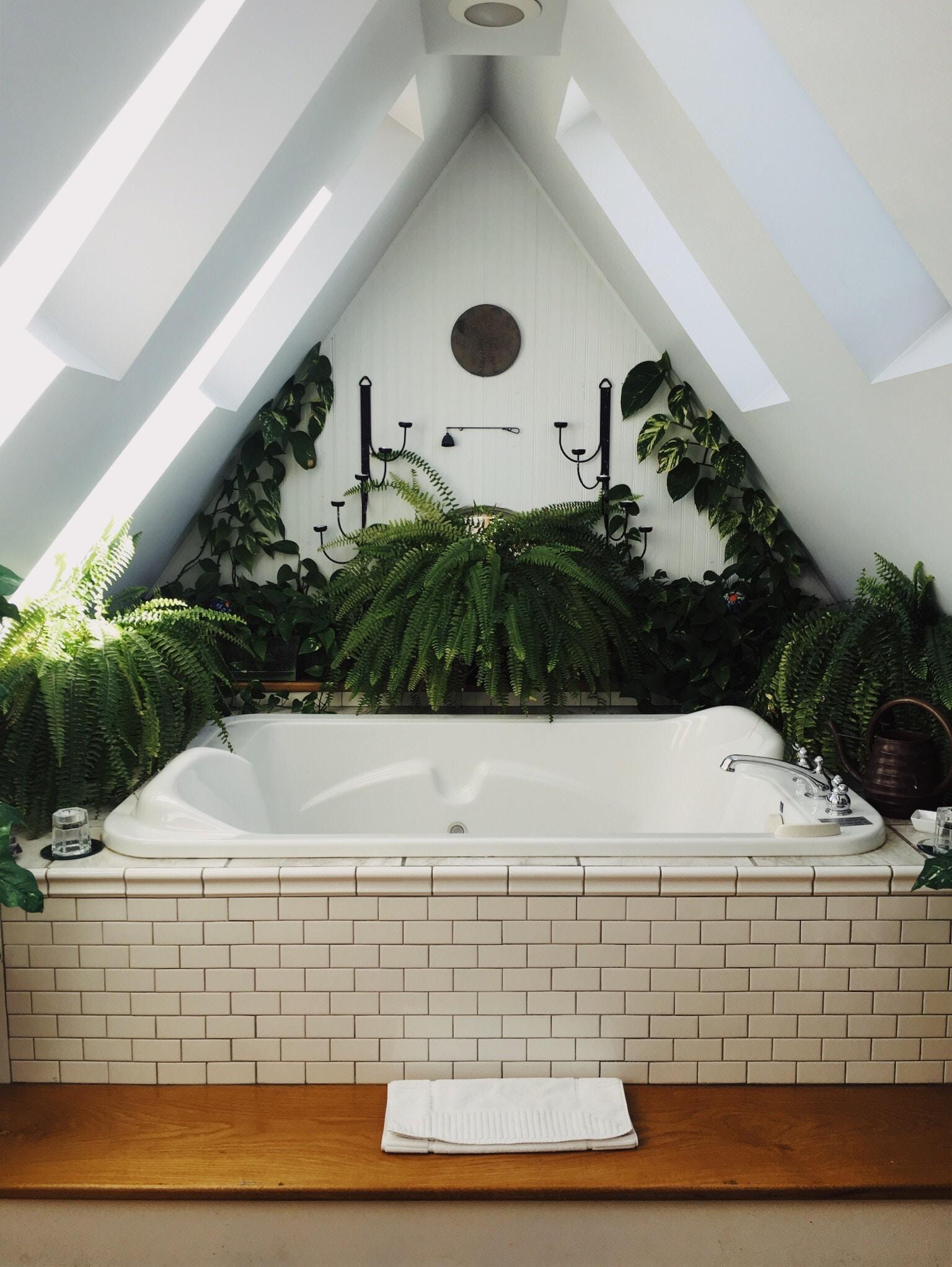 salle de bains avec baignoire et plantes